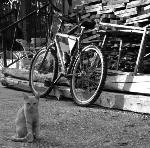 The Cat...